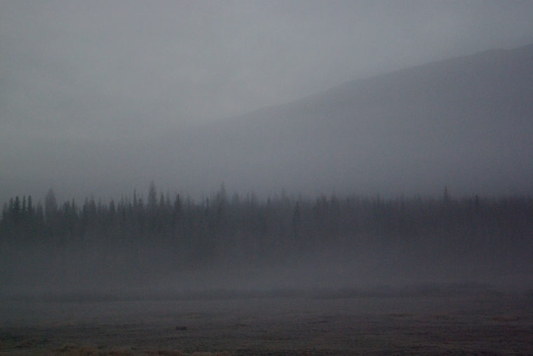 Pines In The Fog - YMCA of the Rockies